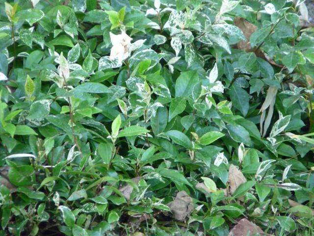 Parterres du jardin olbius riquier hy res for Jardin olbius riquier
