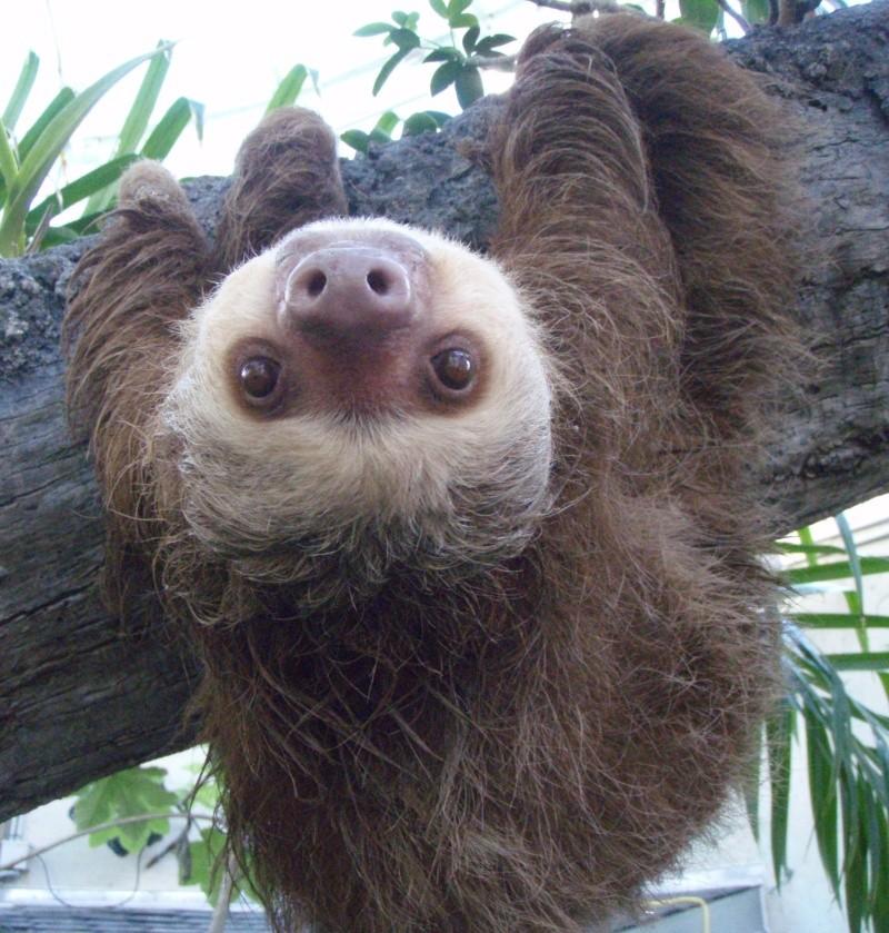 sloth10.jpg