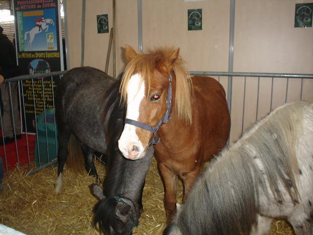 Gourmande et wiggles au salon du cheval equita 39 lyon 2008 - Salon du cheval de lyon ...