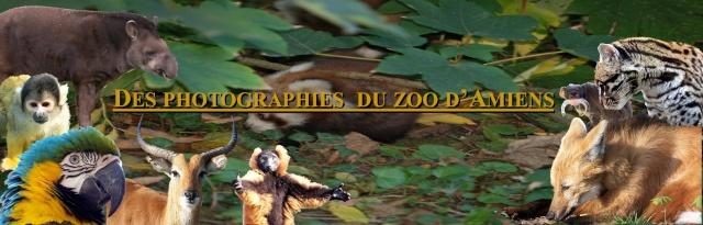Le zoo d'Amiens