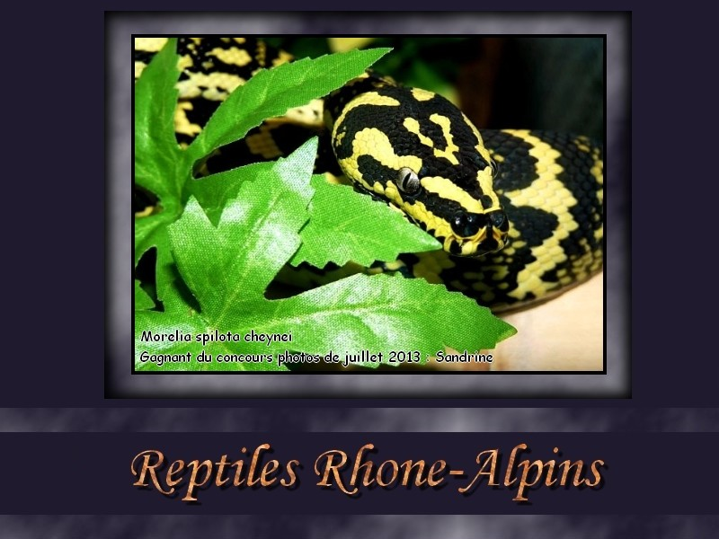 Reptiles Rhône-Alpins