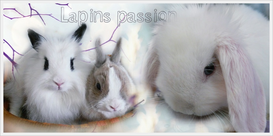 Lapins passion