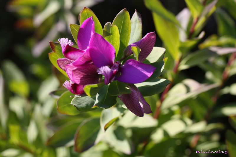Fleur insolite. dans Fleurs et plantes 800_im10