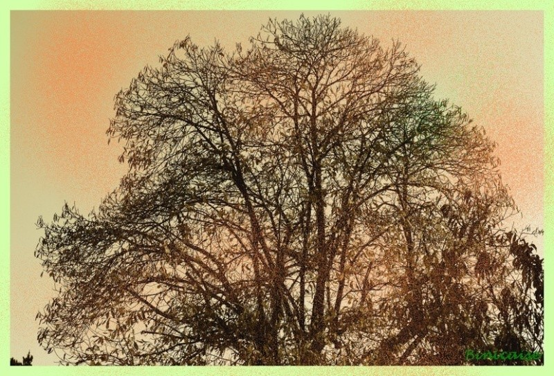 Arbre d'automne. dans Creations arbre_11