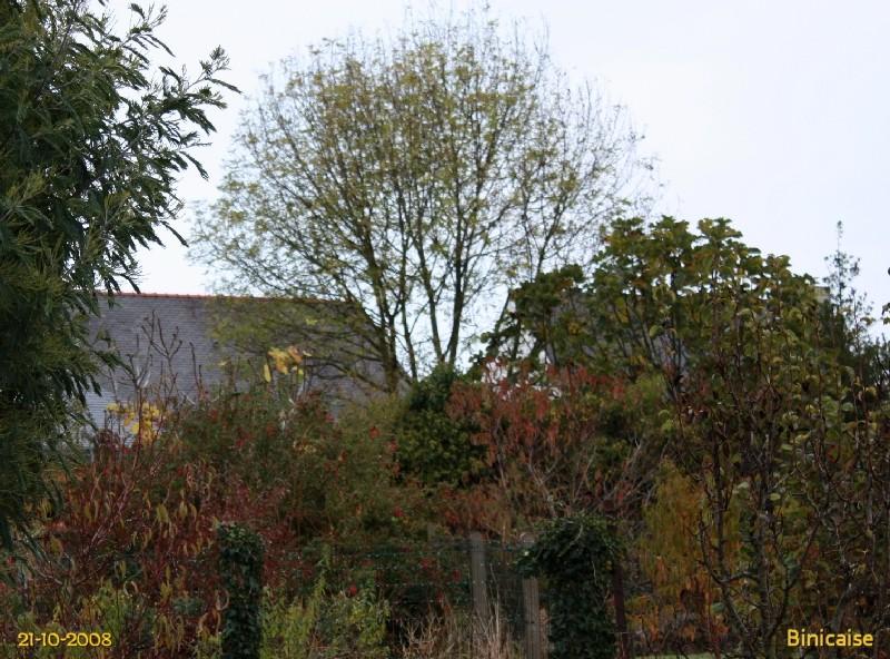 Scènes d'automne au jardin. dans Fleurs et plantes img_0410