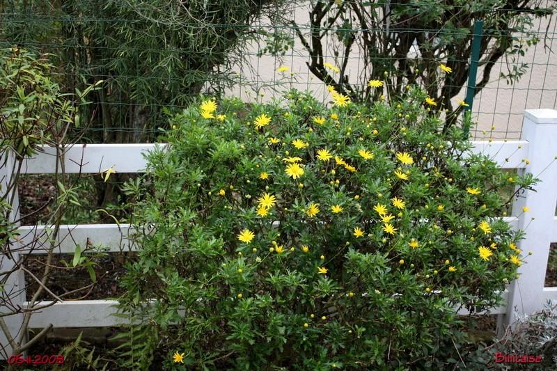 jardin19 dans Photos