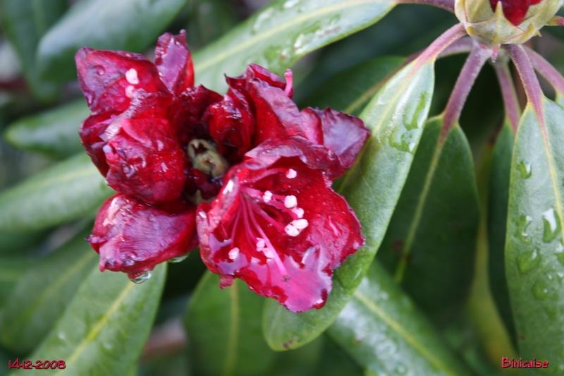 Jardin de Décembre .... dans Fleurs et plantes jardin20