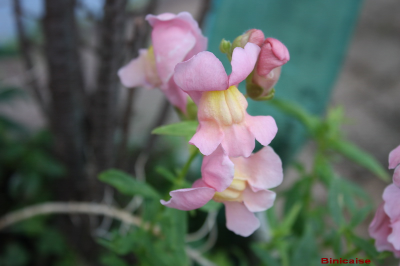 jardin24