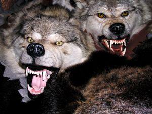 danse avec les loups un hurlement dans la nuit. Black Bedroom Furniture Sets. Home Design Ideas