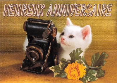 """Résultat de recherche d'images pour """"bon anniversaire chat"""""""