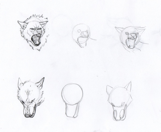 Tuto comment dessiner un loup 2 page 4 - Un loup dessin ...
