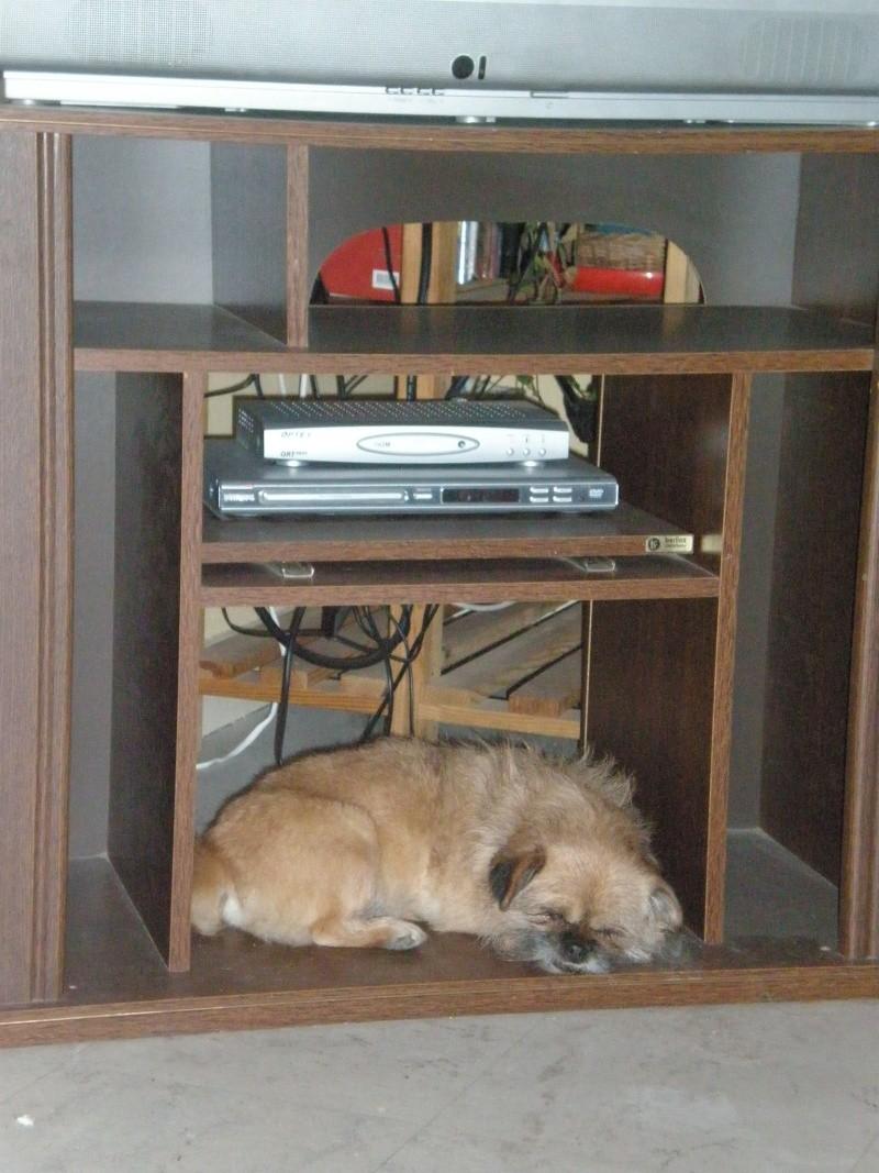 photos insolites de vos toutous page 18. Black Bedroom Furniture Sets. Home Design Ideas