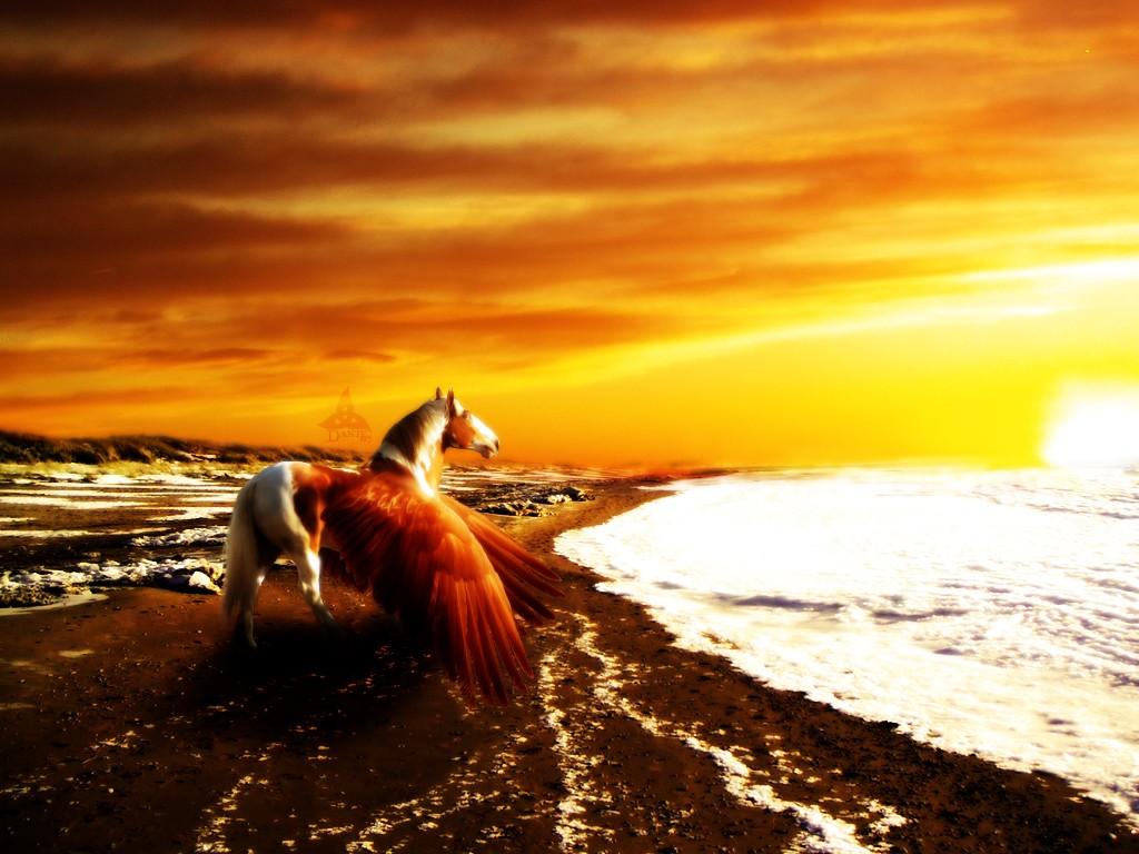 Pegasus~