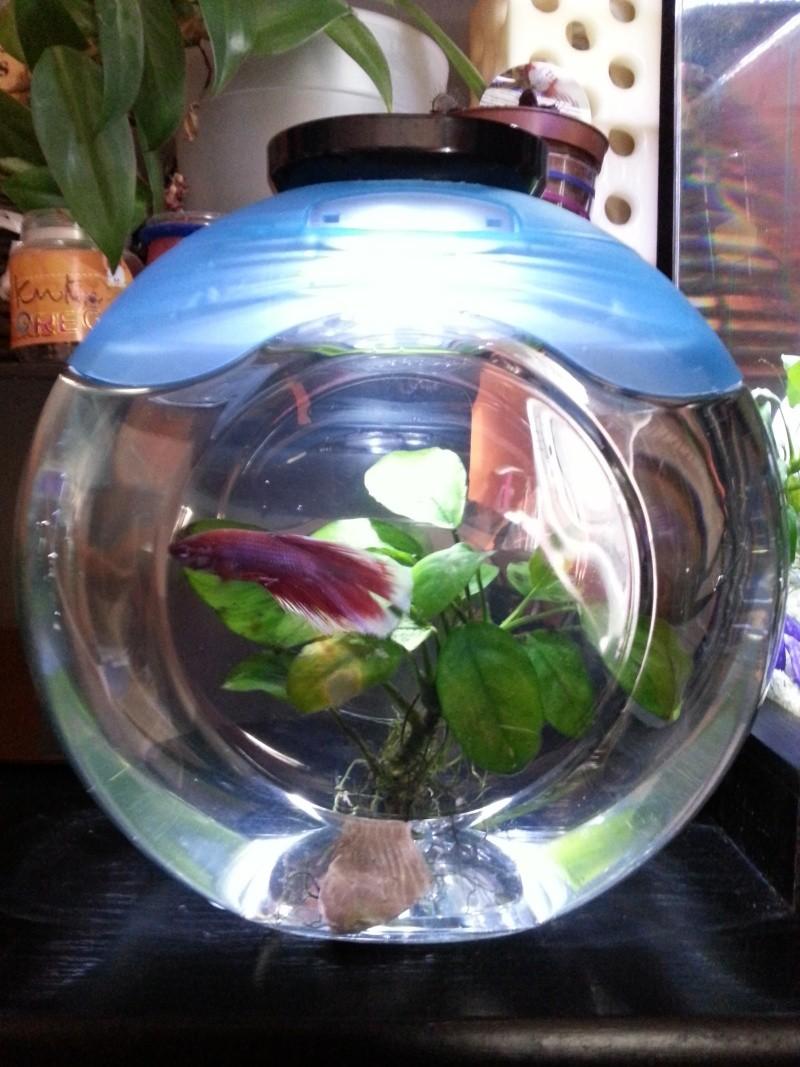 Petit aquarium design a moindre frais for Petit aquarium