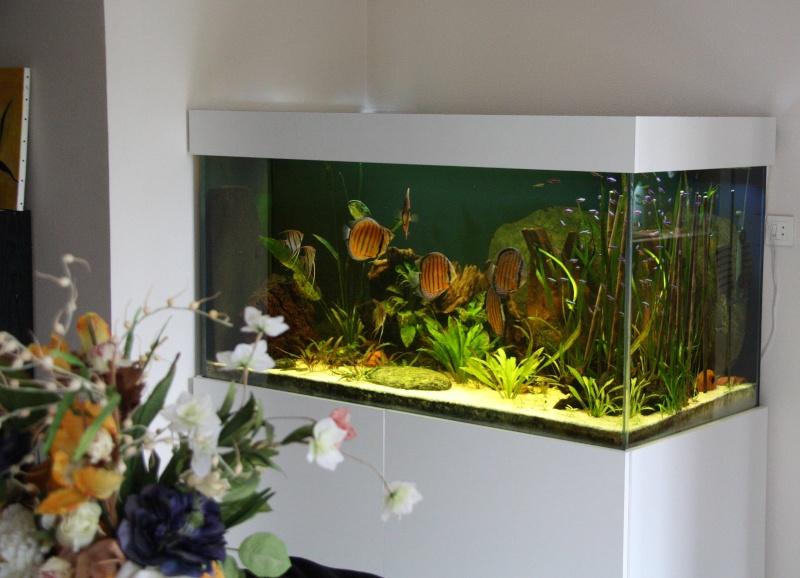 J 39 arr te l 39 aquariophilie apr s 40 ans de passion for Site aquariophilie