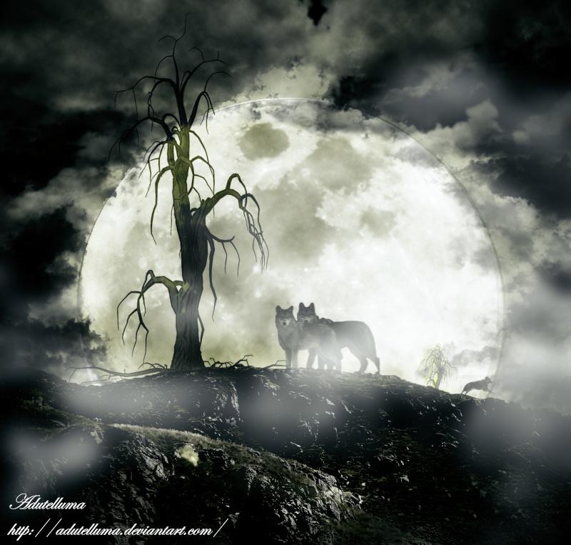 Loups dans la nuit dans Compositions d'images fragme10