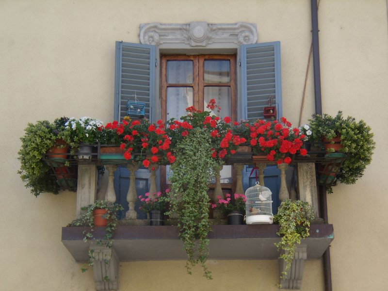 Come Coltivare Fiori Sul Balcone
