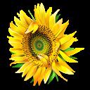 عالم النباتات و الزهور