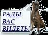 https://i72.servimg.com/u/f72/16/94/00/10/imag0010.png