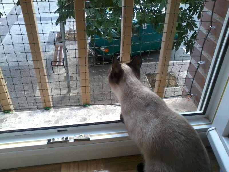 Como colocar un red de protecci n en una ventana for Red transparente para gatos