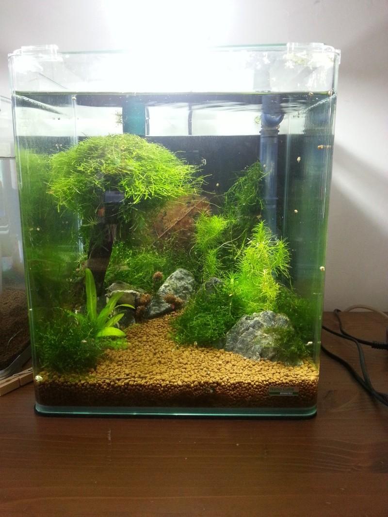 Vends nano aquarium dennerl 20l complete plus 95 for Filtre aquarium 20l