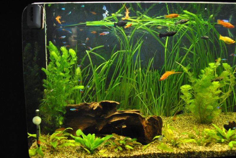 Mon aquarium de 360 litres page 2 for Aquarium 50 litres occasion