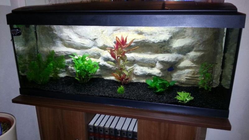 D cor aquarium 120 litres r alis en ciment hydrofuge for Aquarium 120 litres