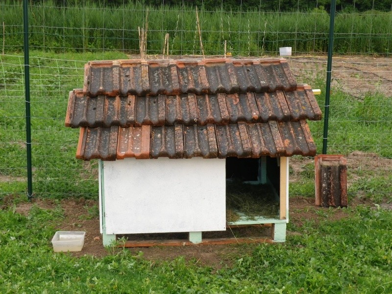 comment construire un abris pour oie. Black Bedroom Furniture Sets. Home Design Ideas