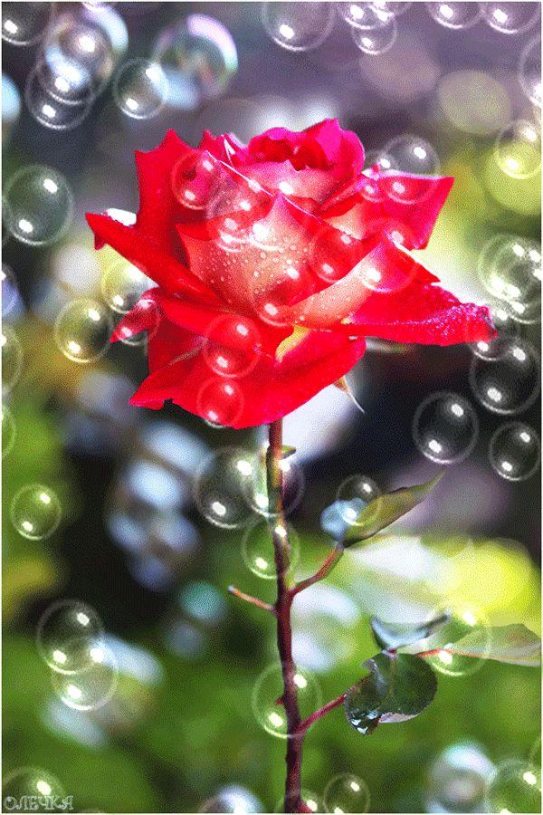 cvety-11.jpg